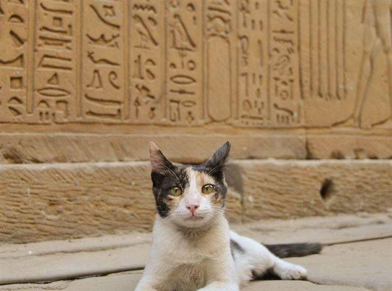 красивые кошки в египте фото оказавшись безвыходном
