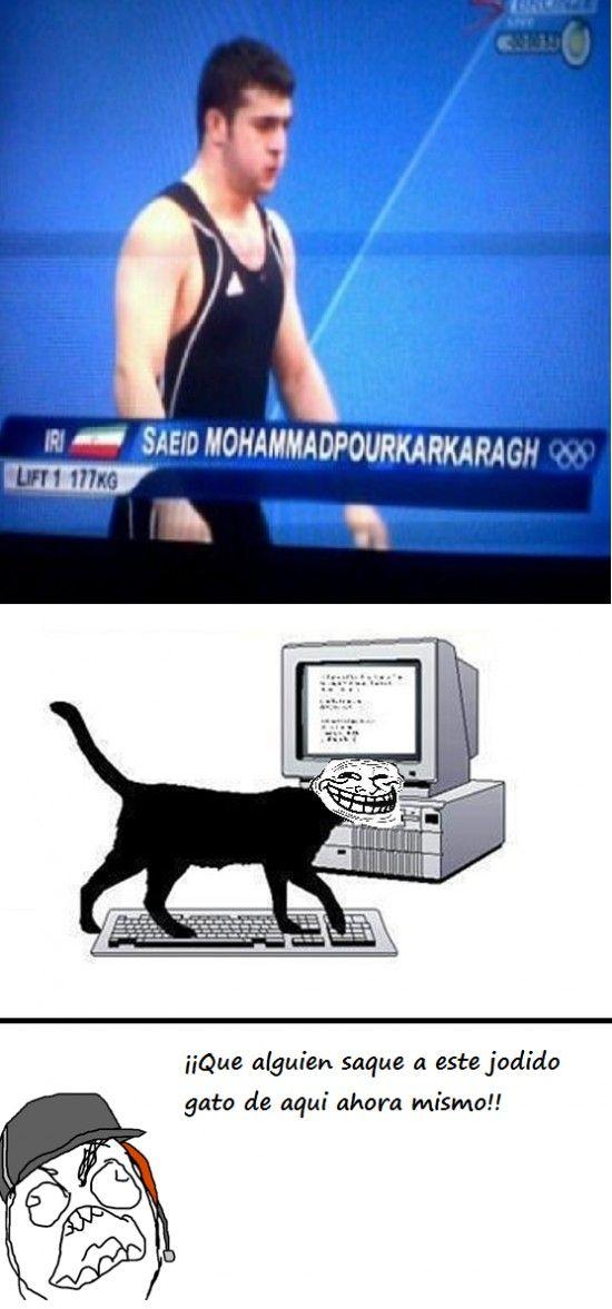Ffffuuuuuuuuuu - Gato troll en televisión