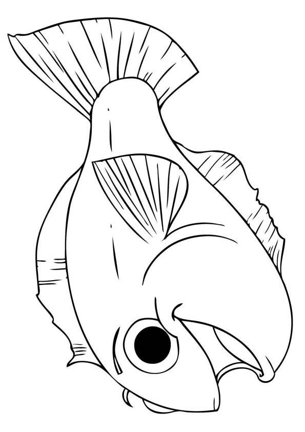 25 Interesting Koi Fish Coloring Pages For Your Toddlers