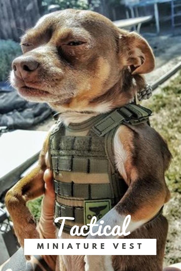 Vest Meme : Tactical, Miniature, Funny, Dogs,, Memes,, Animals