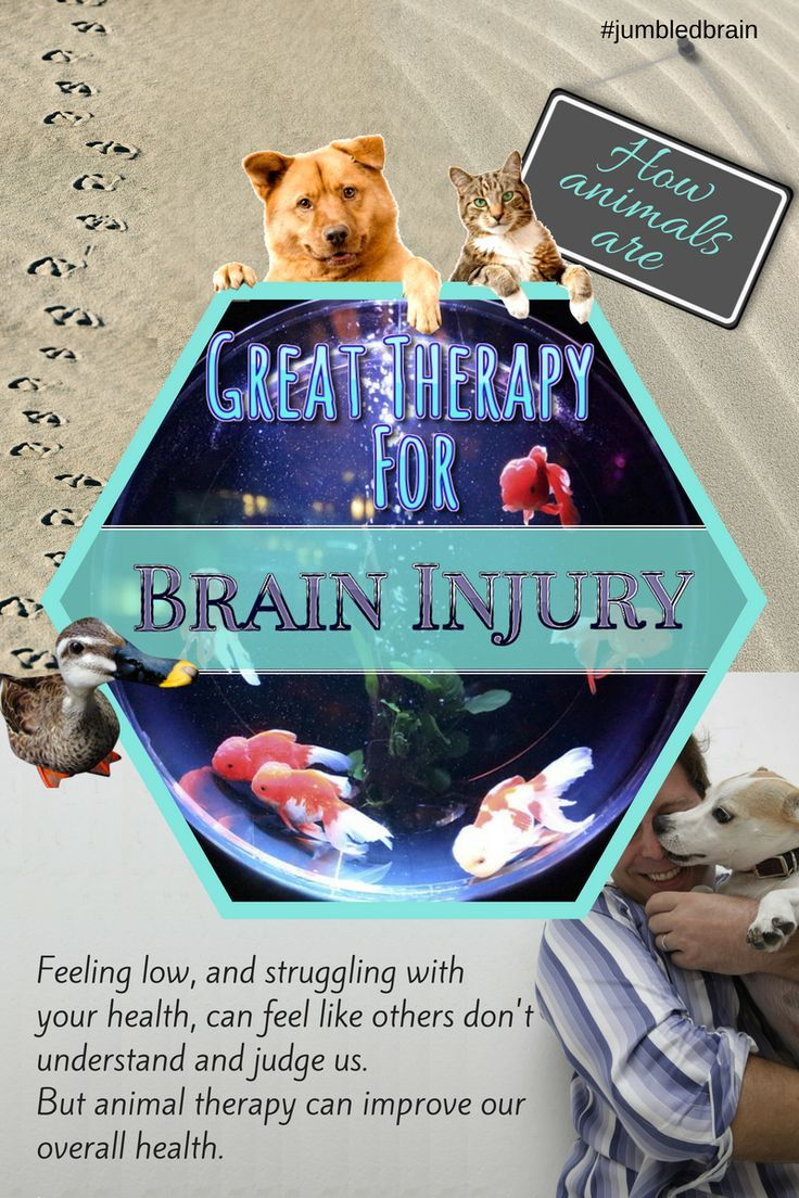 How Animals Are Great Therapy For Brain Injury Survivors Brain Injury Therapy Animals Tramatic Brain Injury