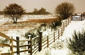 Winter, Landscape, Snow, Nature, Cold