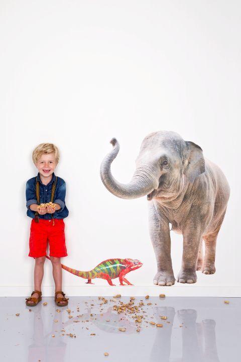 WALL*MANIA muursticker | wall decal #olifant #elephant #cameleon