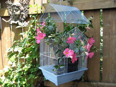Bird Cage Planter On A Garden Wall From Fleamarketgardening.org