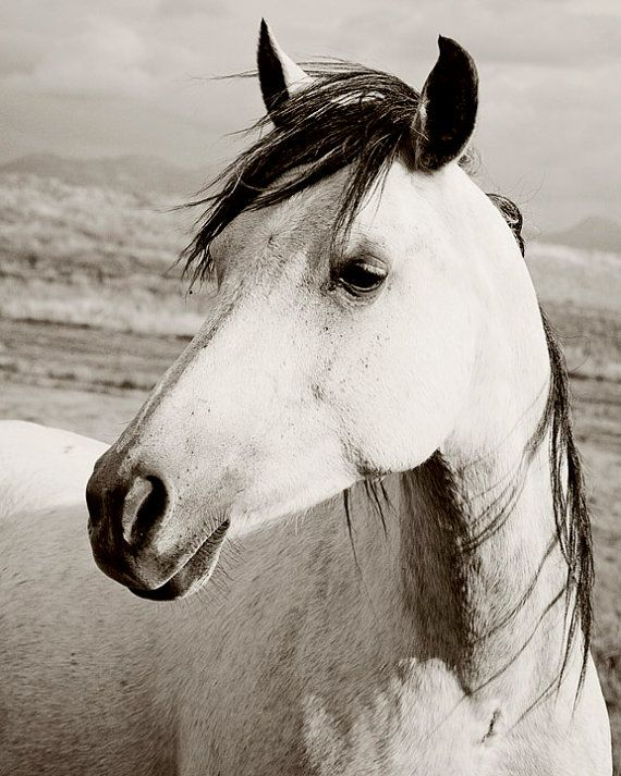 Black and white photograph white horse in vertical landscape 8x10