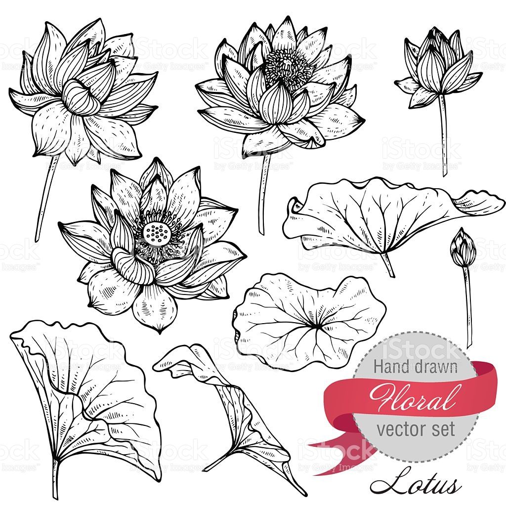 Vector set of hand drawn lotus flowers and leaves sketch - Dessin petite fleur ...