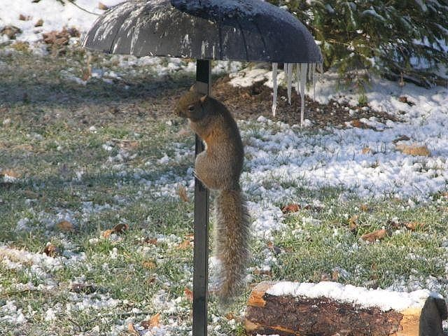 Hot Pole Dancer Lol!