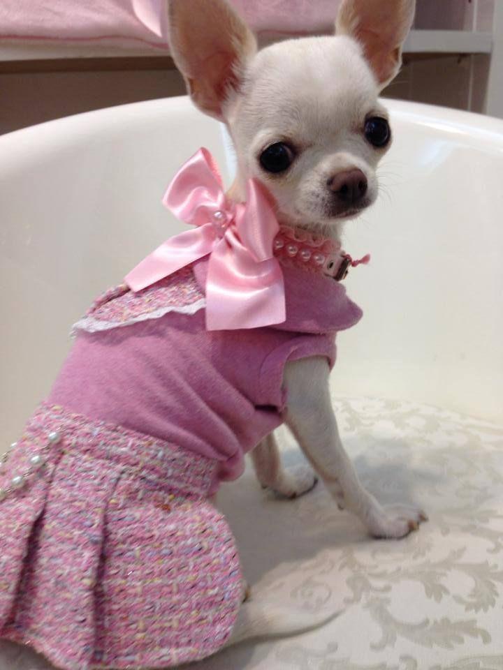 Super Cute Dog Outfit Cute Dog Clothes Super Cute Dogs Cute Dogs