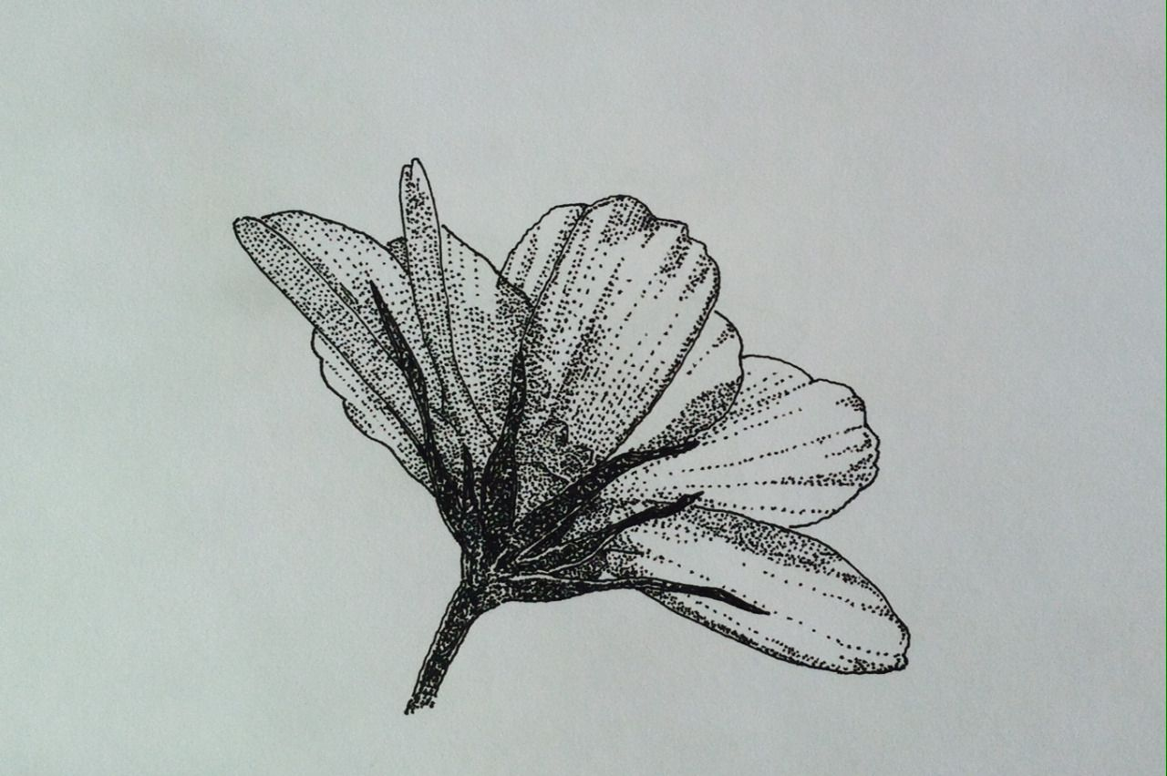 Thursday File Drawings Theme Spring Flowers