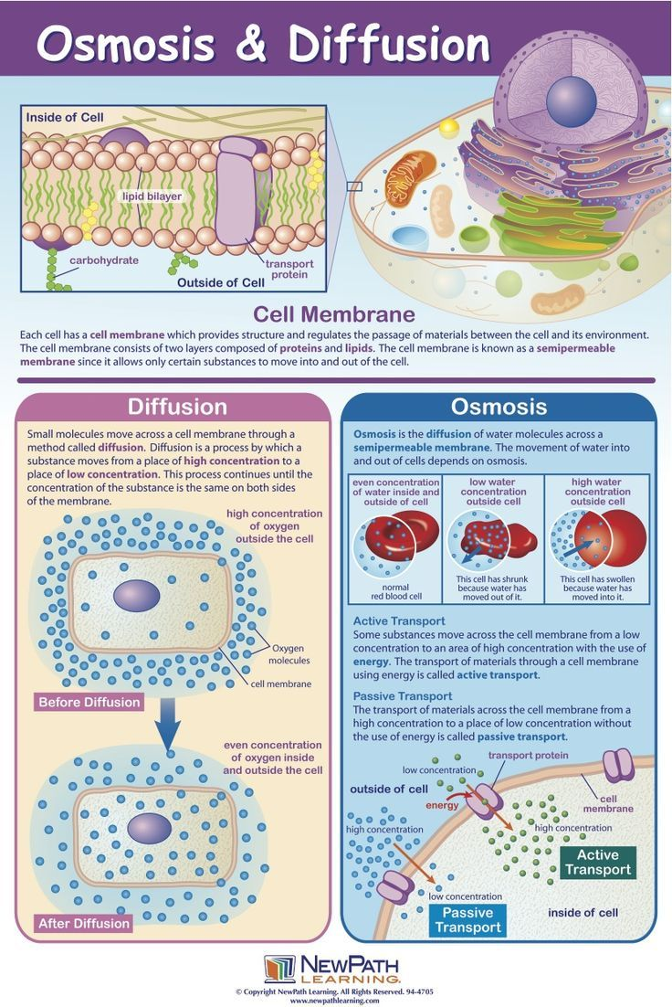 osmosis and diffusion infographics Google Search