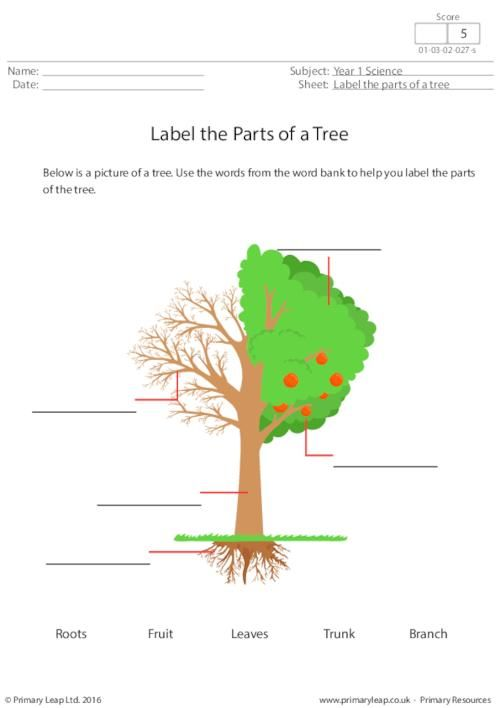 Worksheets For Grade 1 In Science : Primaryleap.co.uk label the parts of a tree worksheet science