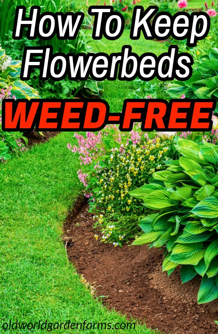 How To Keep Flowerbeds Weed Free - All Summer Long! #outdoorgardens