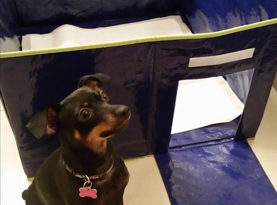 Potty Pad Training Your Dog Dog Potty Indoor Dog Potty