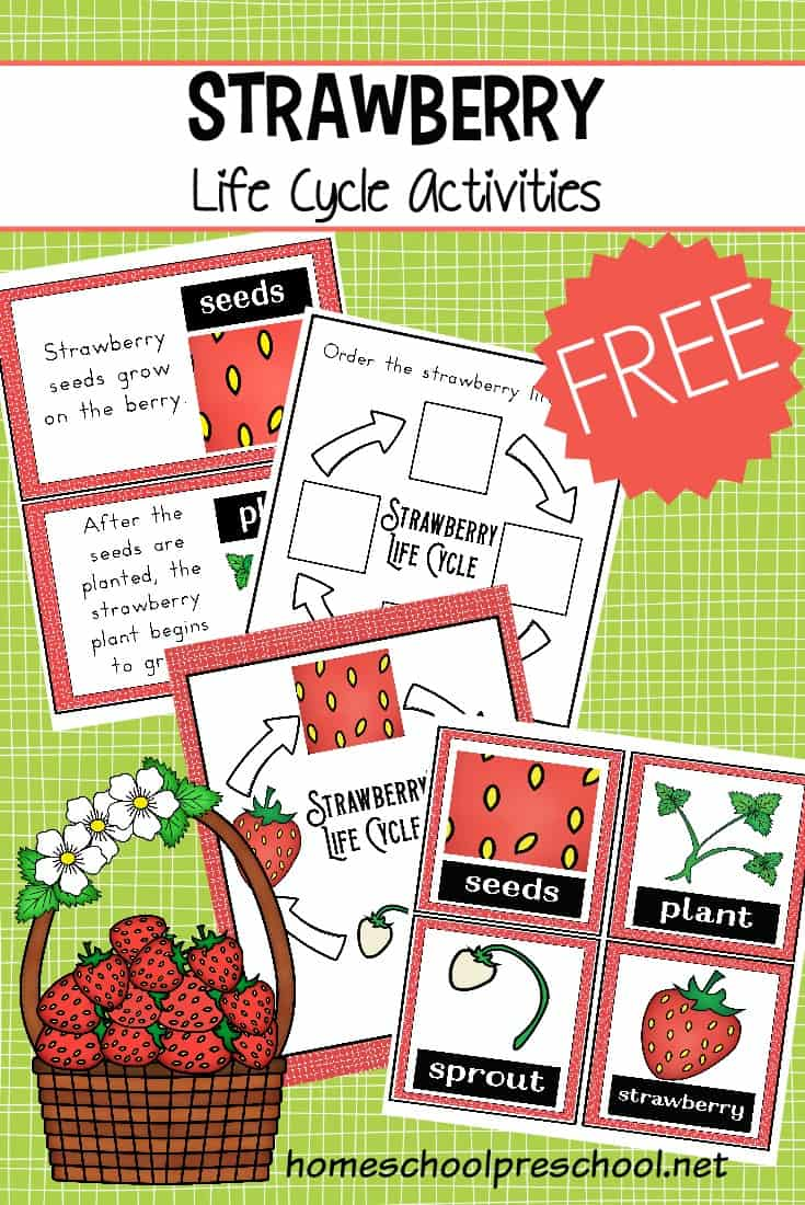 Strawberry Life Cycle Worksheet Pack Summer Learning Cycle For Kids Life Cycles [ 1100 x 735 Pixel ]
