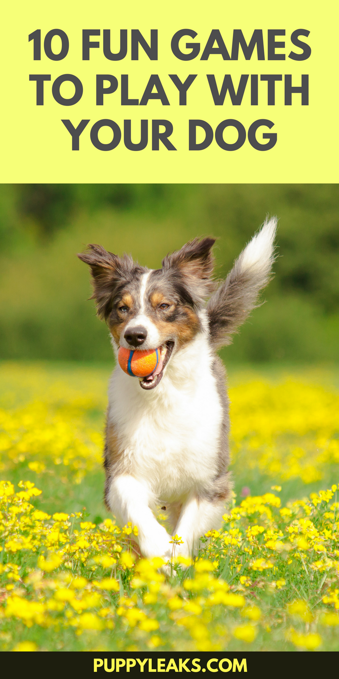 10 Fun Games to Play With Your Dog Dog boredom, Dog