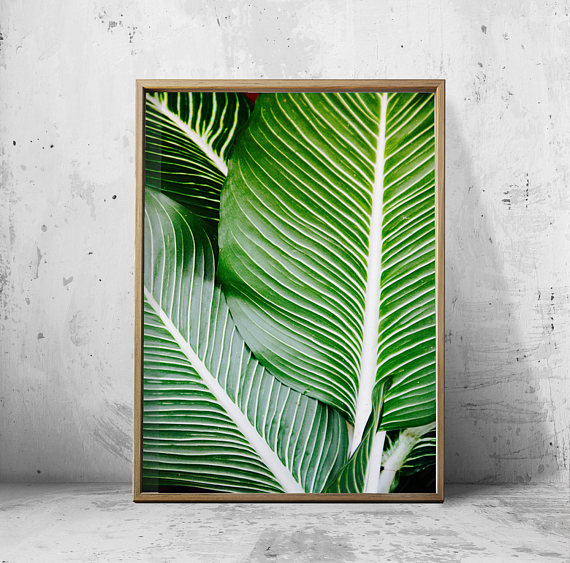 Palm Leaves Photograph Tropical Foliage Boho Home Decor Minimalist Art  Large Printable Poster Green Wall Art