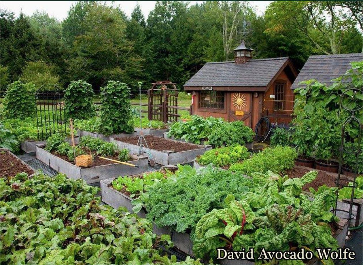 dream garden | Backyard greenhouse, Backyard vegetable ...