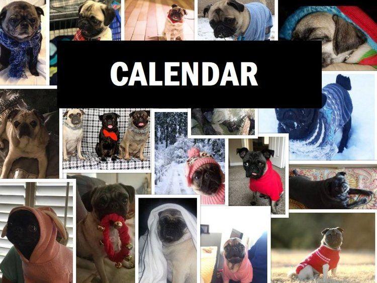 Calendar Jpg Pug Rescue Pugs Rescue