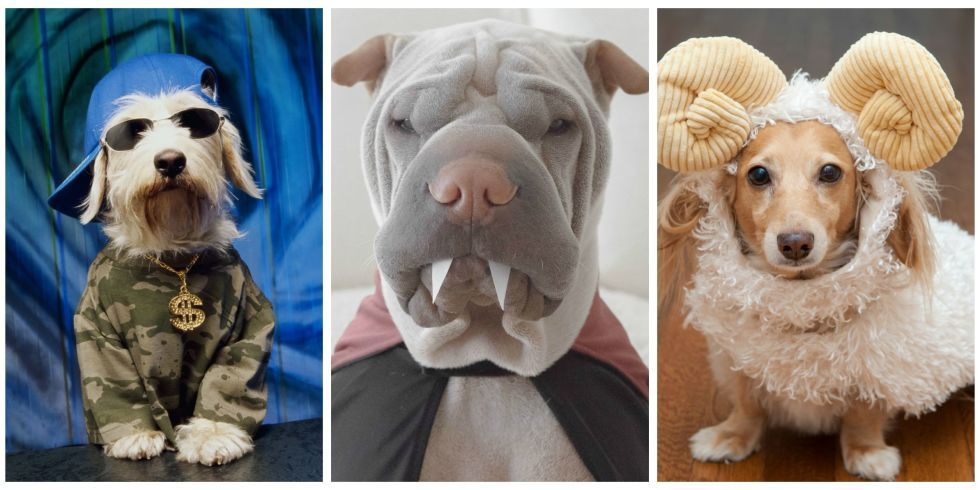 46 Funny Dog Halloween Costumes - Cute Ideas for Pet Costumes & 53 of the Cutest Halloween Costumes for Dogs