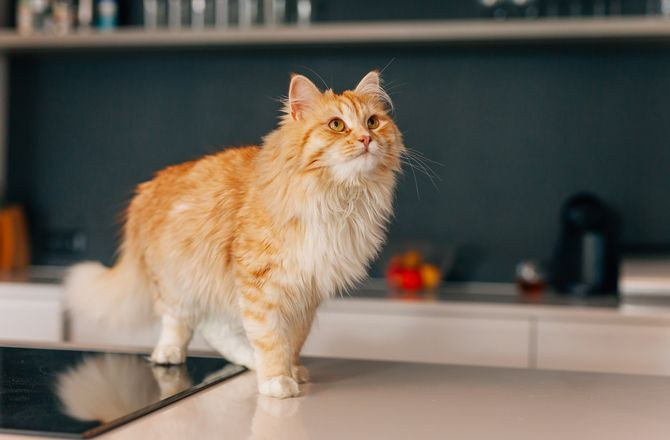 We Love That Cats Play By Their Own Rules But It Would Be Nice To Understand Some Of Their Less Endearing Beha Cat Behavior Cat Behavior Problems Cat Problems