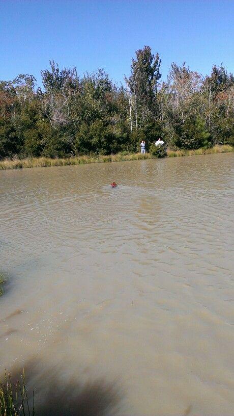 Swimming Trae