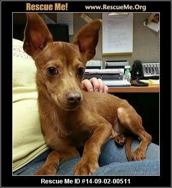 - Columbiana County Dog Pound - Lisbon, OH Rescue Animals