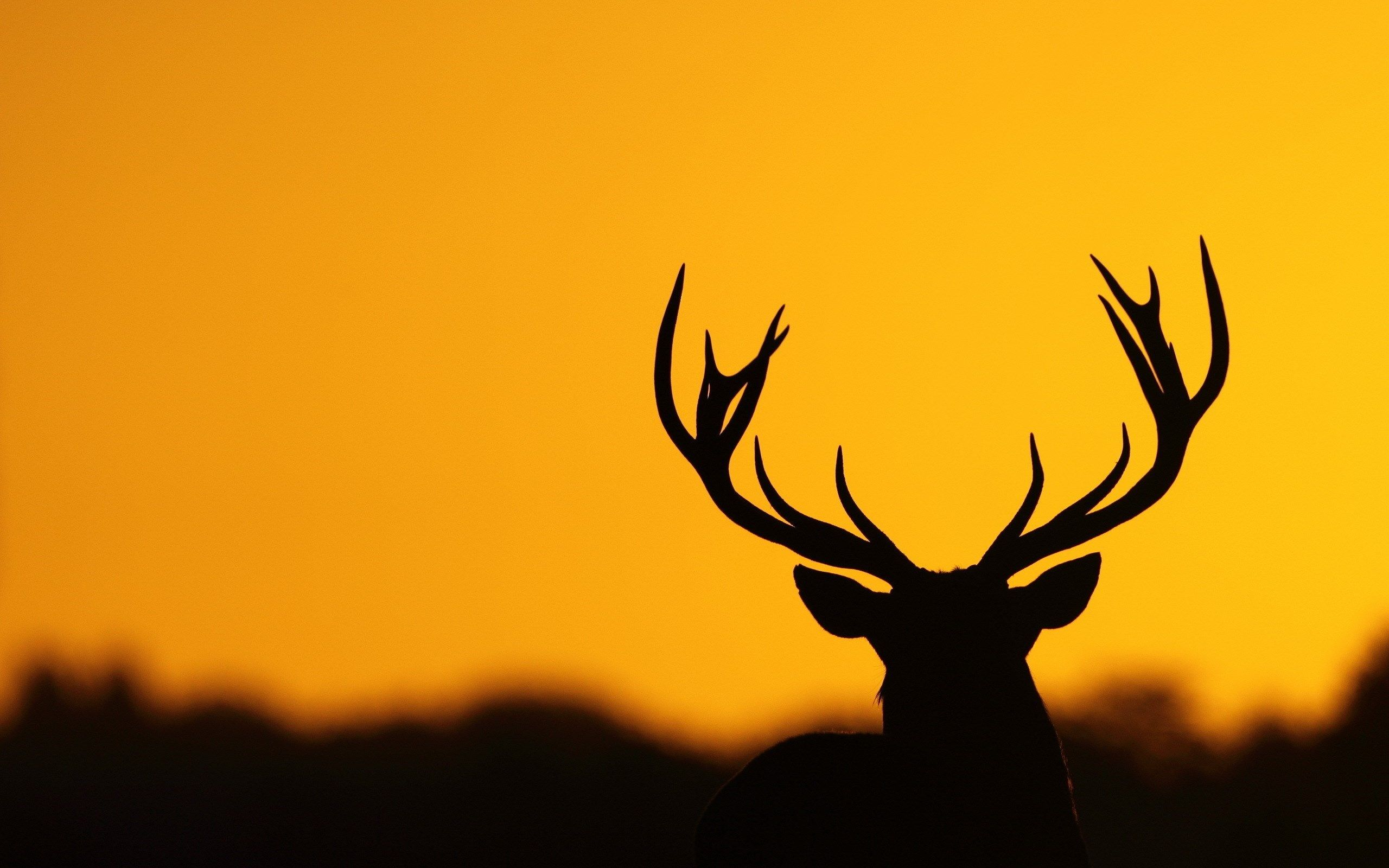 deer wallpapers android apps on google play