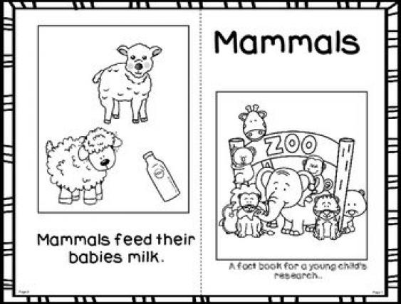 Fact Booklet Mammals mammals mammals worksheet in