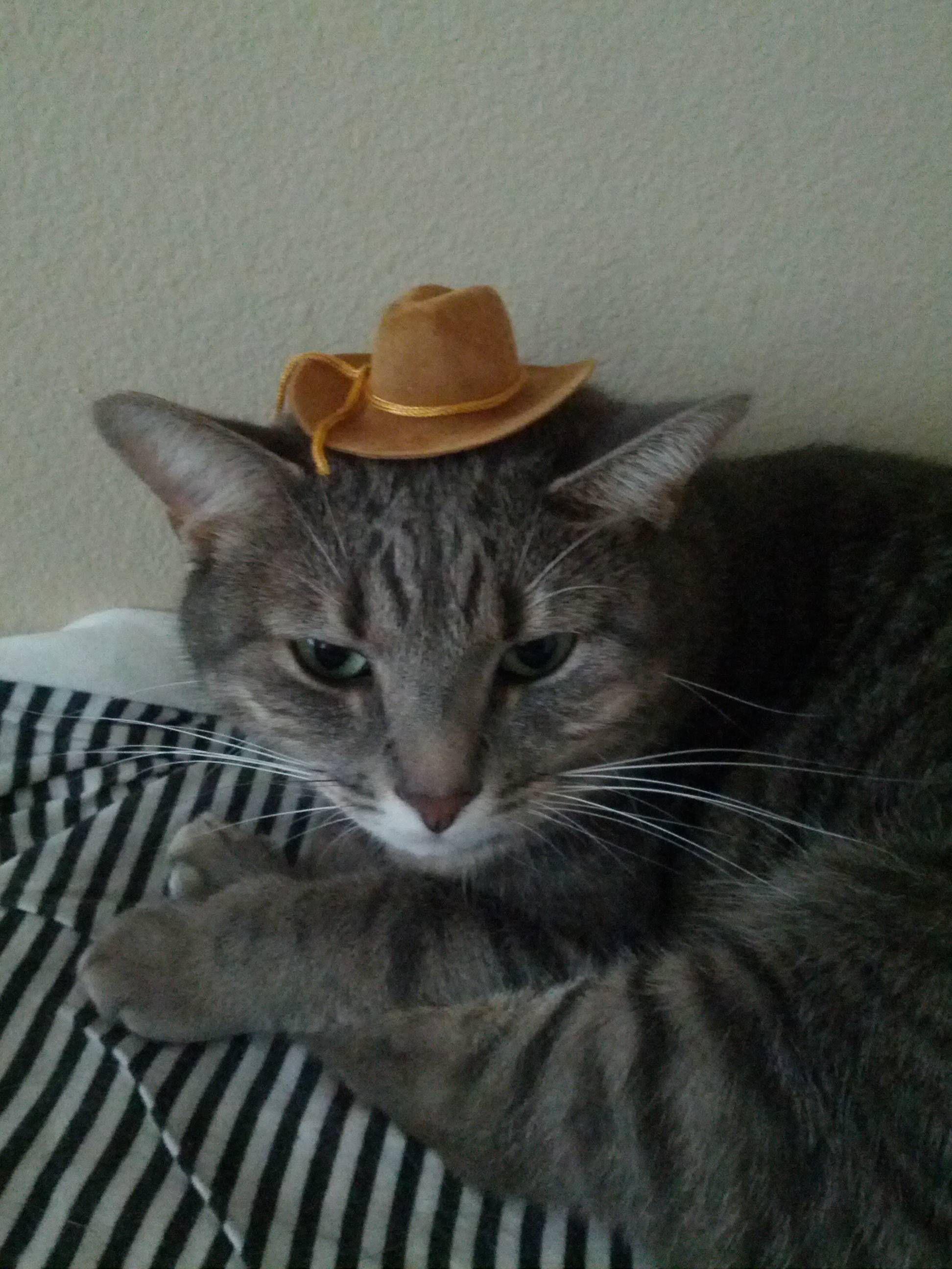 Yeeeeeehaaaaaw! The lazy cowgirl cute cat