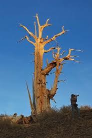 메마른 나무