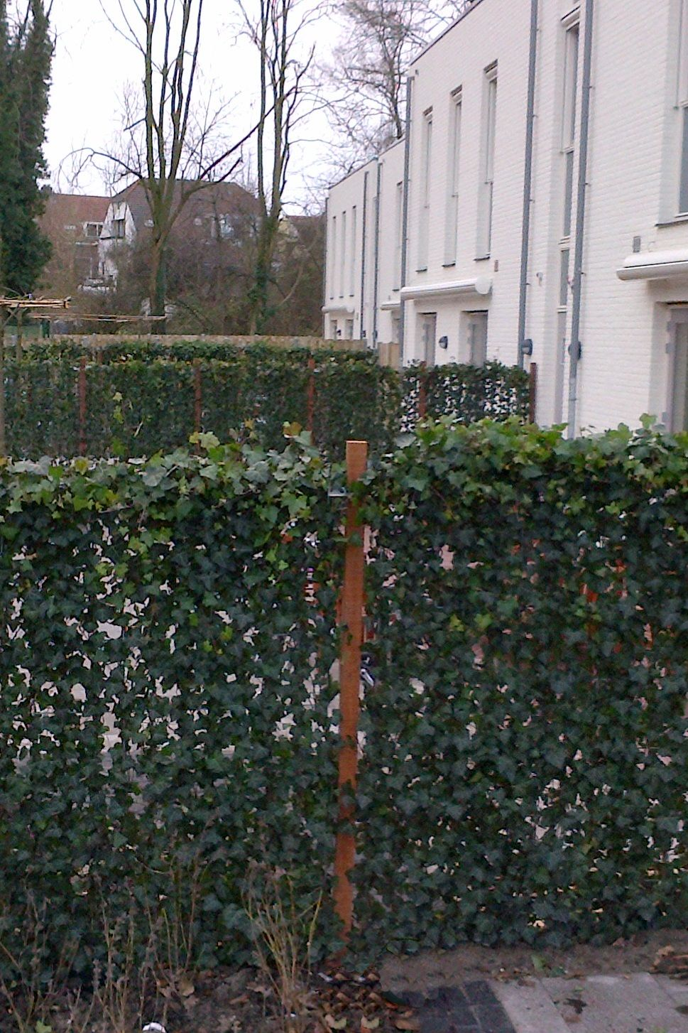Living Privacy Fence Instant Living Fence With Climbing Ivy Privacy For Patios