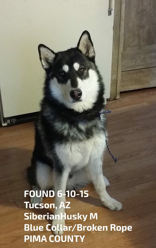 Pin By Us Lost Dog Registry On B W Found Siberian Huskies Us