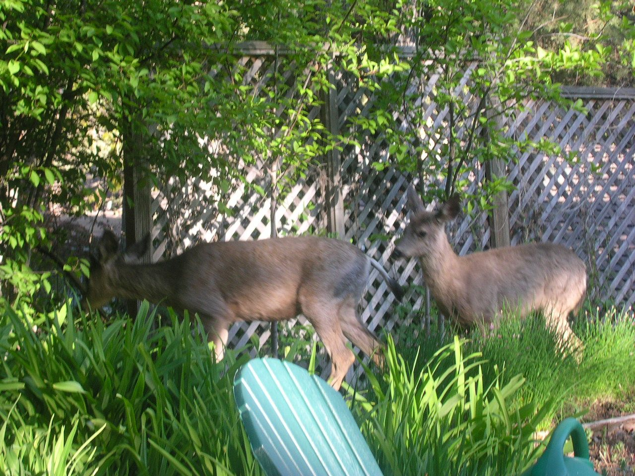 Time for the neighborhood deer to munch all your plants away!