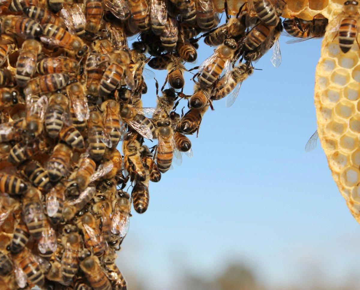5 THINGS NEW BEEKEEPERS SHOULD NOT WORRY ABOUT # ...