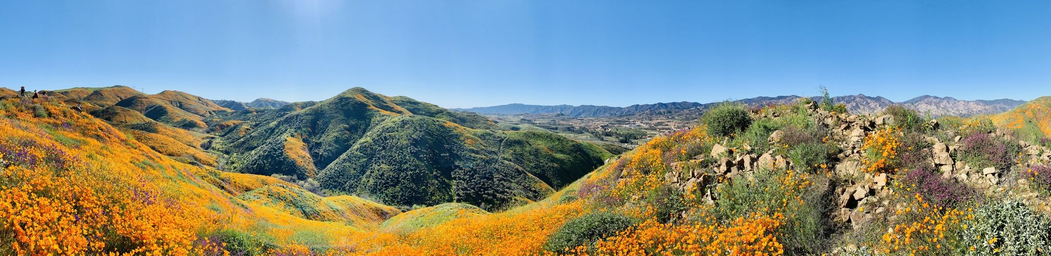 Spring Blooms in Walker Canyon, San Diego County. Photo
