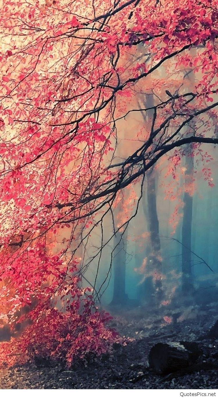 Wallpaper Collection +37 Free HD nature wallpaper iphone
