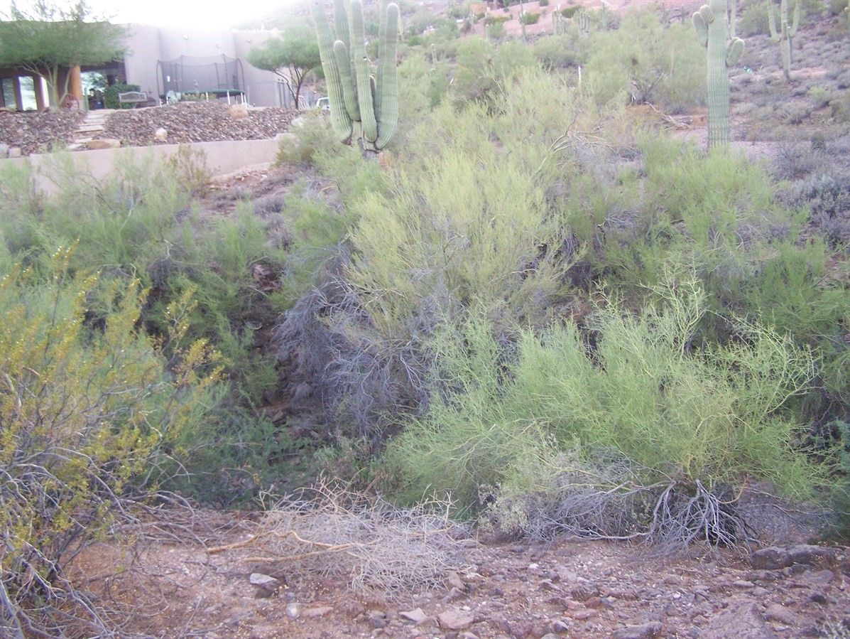Desert Hills Custom Home-site with water!