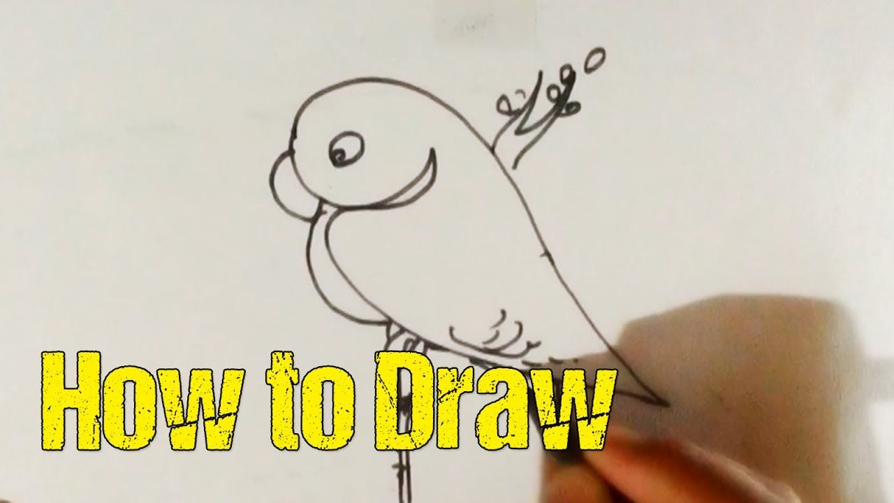 How To Draw Parrot Parrot Drawing With Colour Step By Step