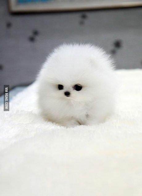 A Ball Of Floof Cute Baby Animals Cute Animals Baby Animals