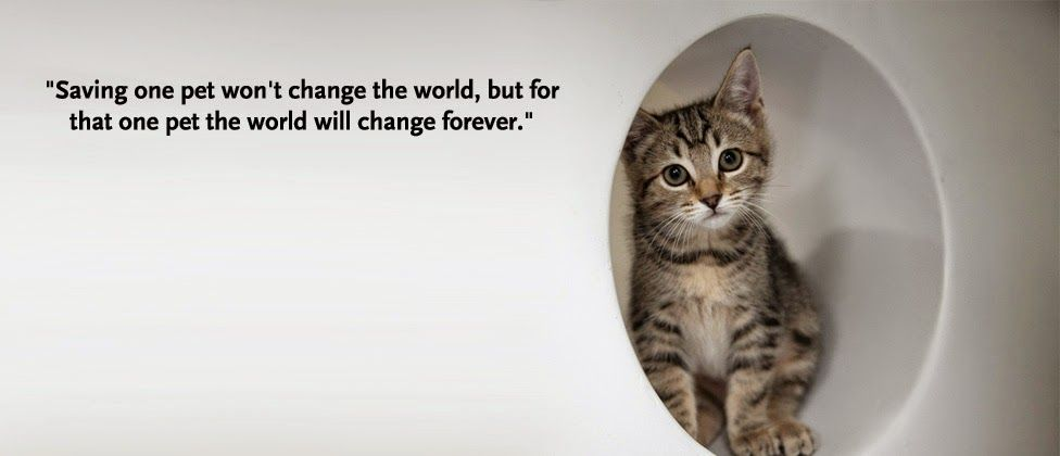 Www Prekandksharing Blogspot Com Animal Adoption Quotes Animal Quotes Animals