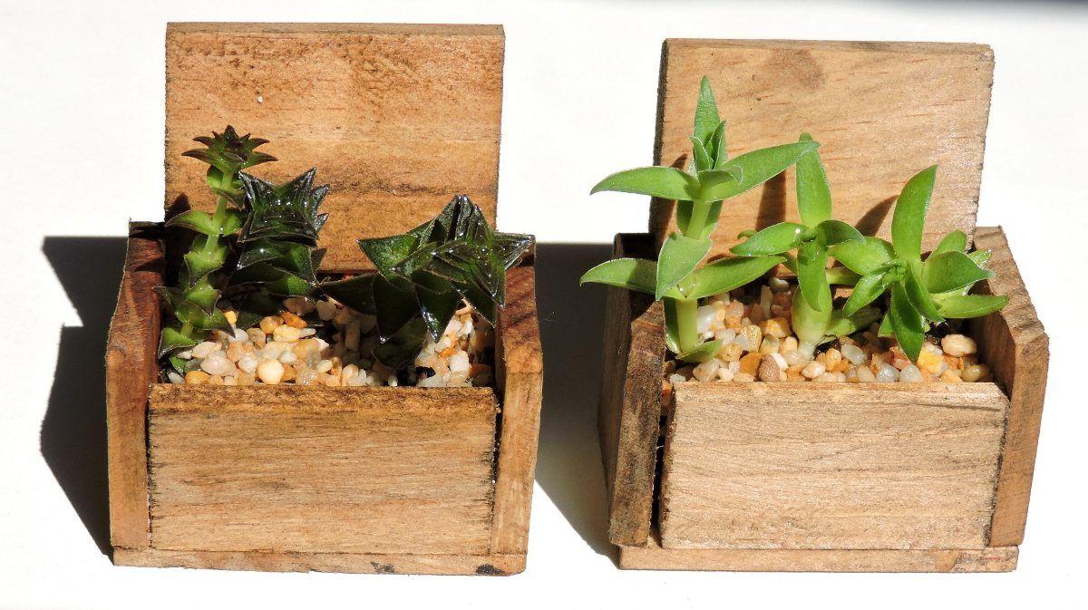 Recuerdos bautizo toda ocasi n plantas suculentas for Suculentas santiago