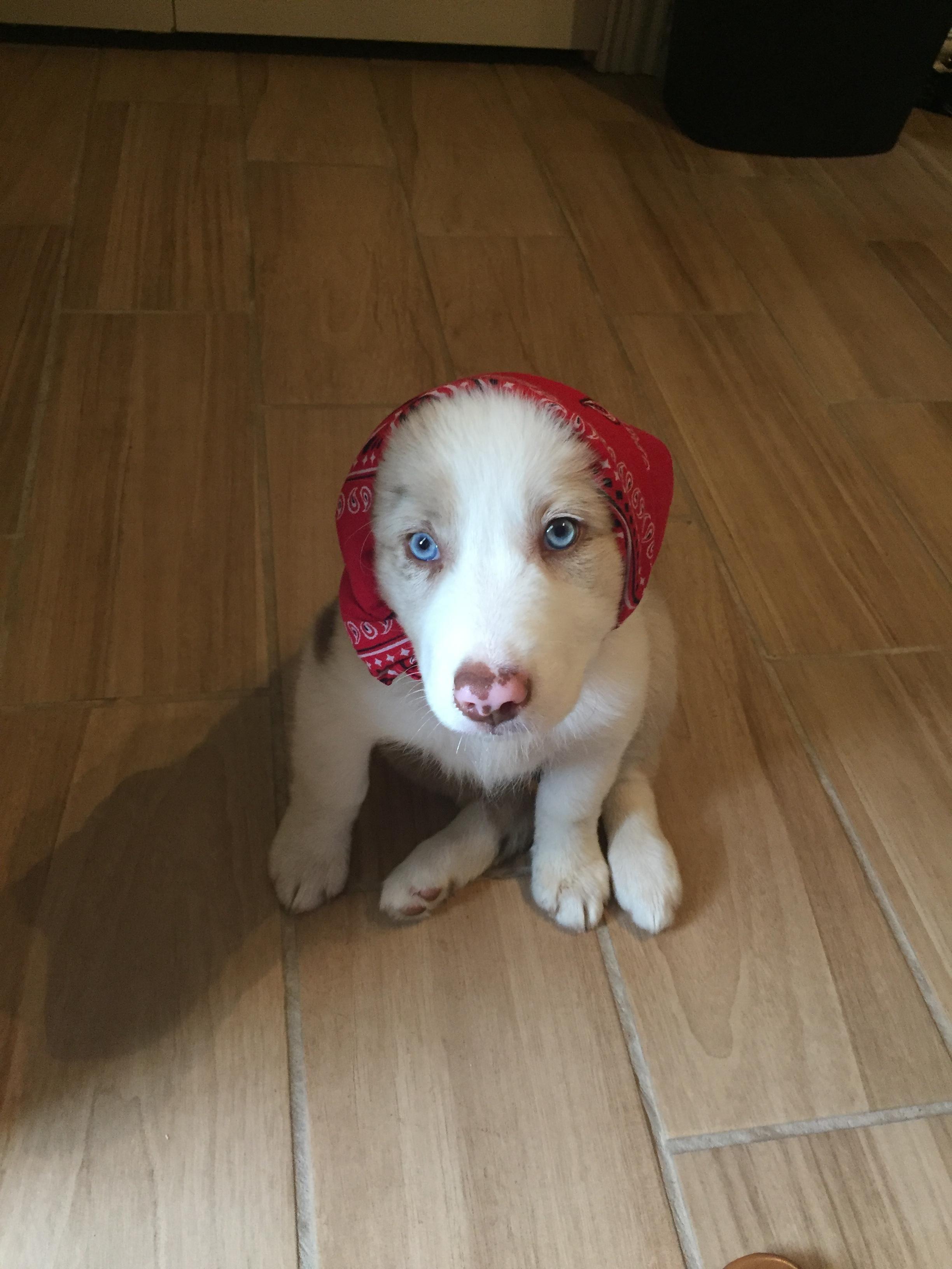 Our babushka iftphlat cute uc pinterest dog