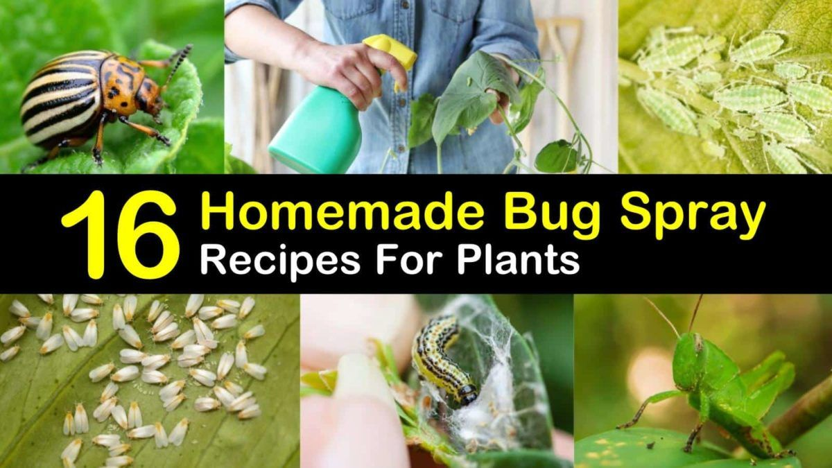 16 doityourself bug spray recipes for plants in 2020