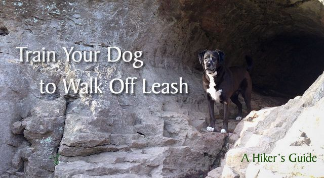 How To Train Your Dog To Walk Off Leash A Hiker S Guide