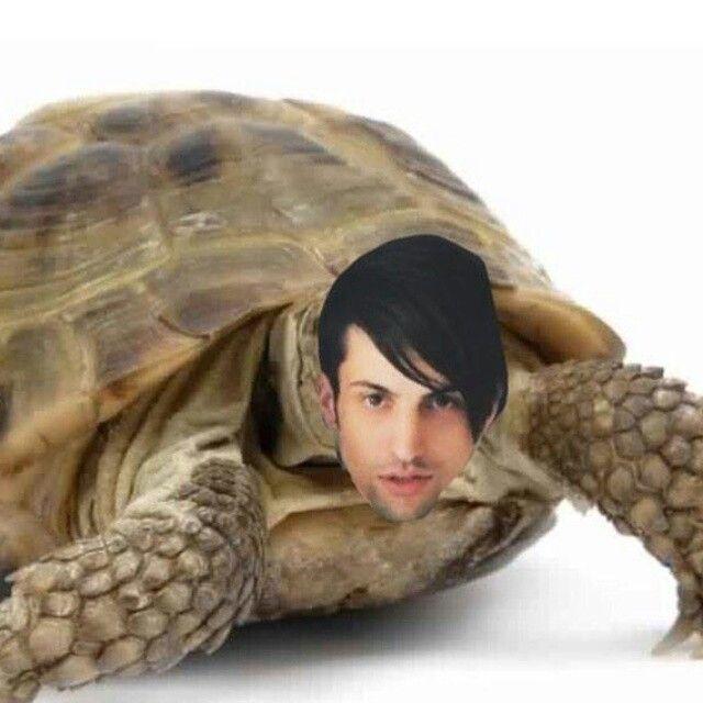Mitch the turtle