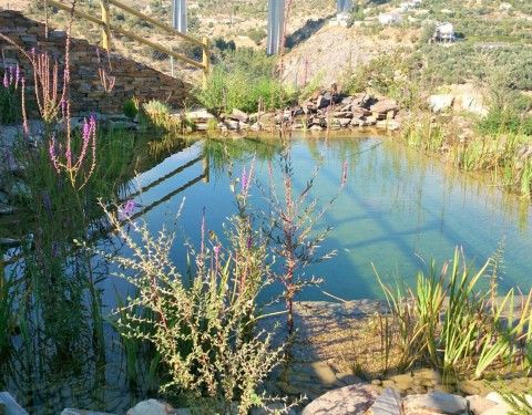 construccin piscina natural sistemas ecolgicos piscinas ecolgicas