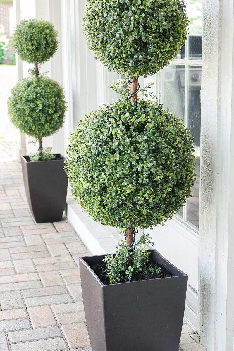 Outdoor Topiaries With Images Outdoor Topiary Topiary Plants Topiary