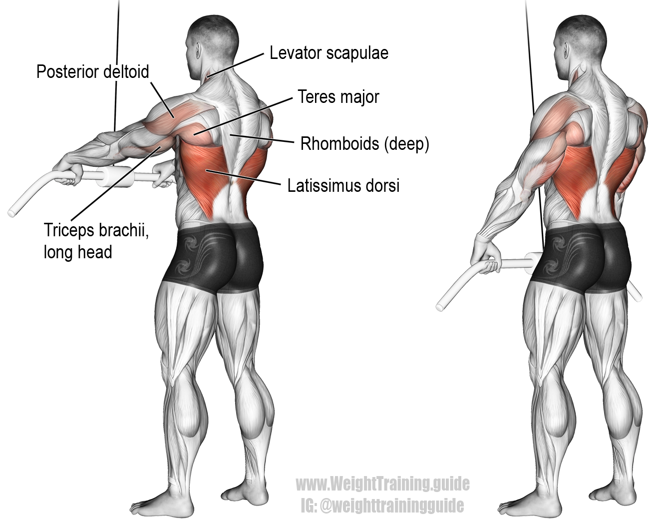 Cable Straight Arm Pull Down Exercise Instructions And Video