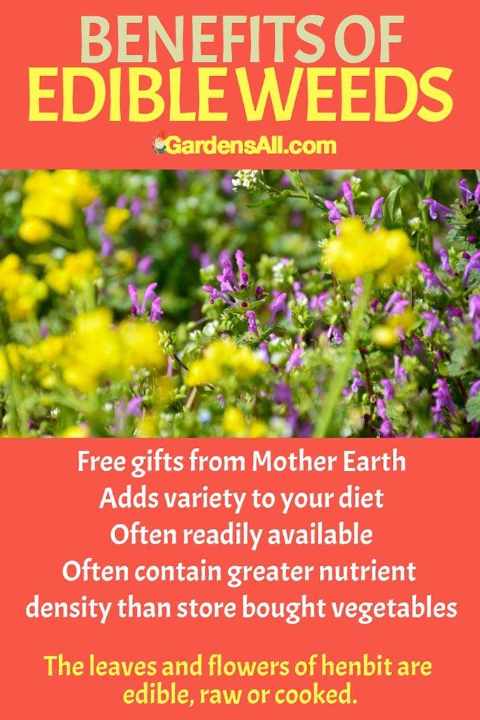 Edible Backyard Weeds You Can Eat Edible Wild Plants 400 x 300