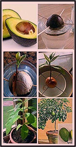 Photo of Pflanzen – Gartendekorationsideen – Garten Pflanzen Ideen – Mein Blog